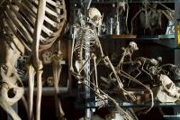 Primate skeletons in the Grant Museum of Zoology, open to the public Monday to Saturday, 1-5pm