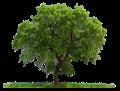 Exeter Trees UK