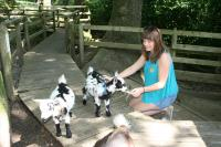 woman with goats at Becky Falls