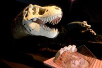 Life size animatronic dinosaur heads in Dino Jaws