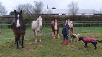 time with the dogs and horses