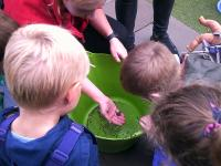 Finding a frog in the garden and exploring nature in a hands on way