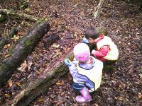 Searching for mini beasts in the woods.