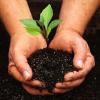 Whitstable Gardening Scheme