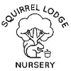 Squirrel Lodge Nursery and Forest School