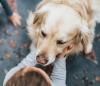 Understanding The Benefits Of Pets For Kids