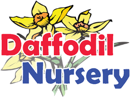 Daffodil Nursery Ltd