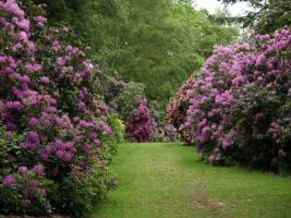 harcourt_arboretum_1__4.jpg