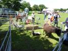 Come along and see `Time Out` animals, Animal Sanctuary from  Alvescot, Oxon