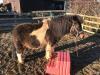 Training the ponies