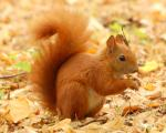 Awesome Autumn Animals Picture.