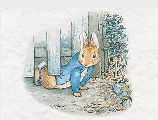 classic drawing of Peter Rabbit, under a garden gate by Beatrix Potter