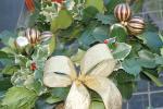 Botanic Gardens Flowers