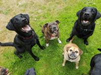 Strider, Ellie, Violet and Louis posing for a treat on one of their amazing group dog walks. June 2018