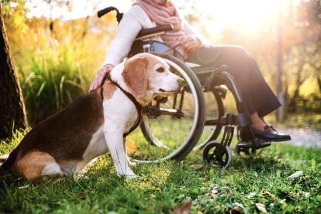 Image of woman in wheelchair outdoors, stroking a dog.