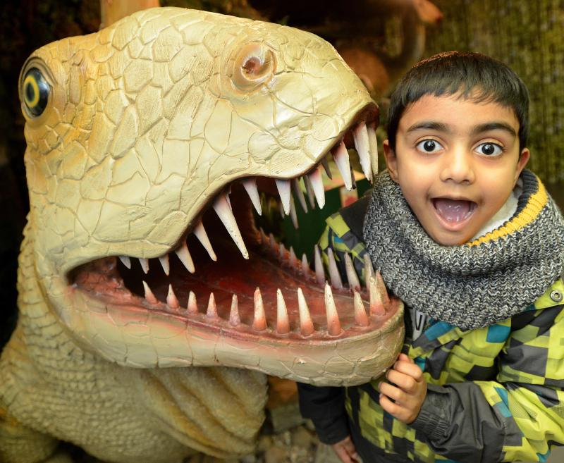 Get up close and personal with the dinosaurs.