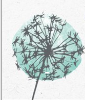 Picture of a feathery dandelion coloured with a teal hue