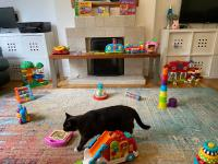 Cat in play room with lots of toys on the floor