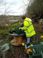 making Spring containers on the allotments.